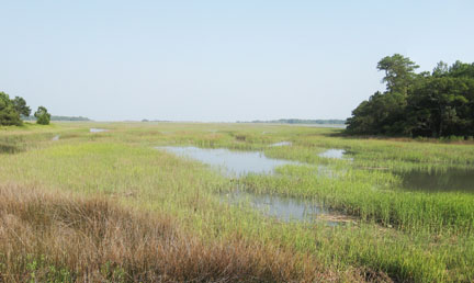 A South Carolina Marsh view